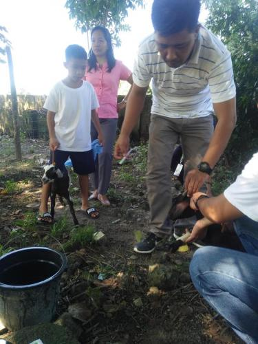 Department of Agriculture Deworming of Goat at Brgy Timmaguab Elementary School