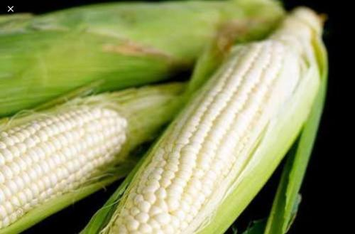 GLUTINOUS WHITE CORN SEEDS AVAILABLE FOR FREE AT STA. IGNACIA MUNICIPAL AGRICULTURE OFFICE SEPTEMBER 11, 2018