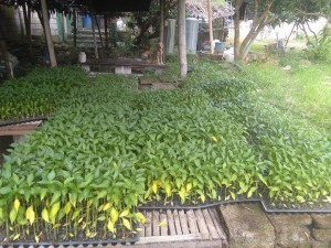 SILAW_Vegetables_Seedling_Project